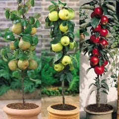 3 Miniature Fruit Tree Collection