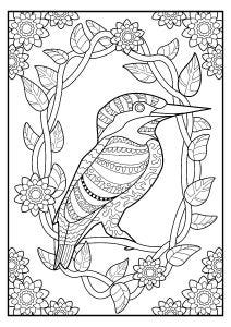 Kingfisher Colouring Page