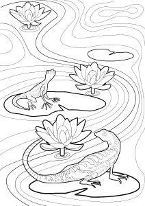Salamanders Colouring Page