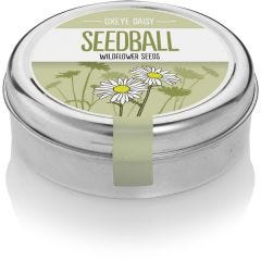Oxeye Daisy - Wildflower Tin
