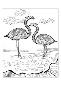 Flamingos Colouring Page